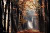 in the spotlight (larsvandegoor.com) Tags: autumn trees light fall nature forest woodland landscape path sunrays beams sunbeams rayoflight treelined