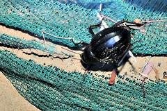 Arabian Darkling Beetle (tinlight7) Tags: bassata insect desert sand ummalquwain uae night nocturnal taxonomy:kingdom=animalia animalia taxonomy:phylum=arthropoda arthropoda taxonomy:subphylum=hexapoda hexapoda taxonomy:class=insecta insecta taxonomy:subclass=pterygota pterygota taxonomy:order=coleoptera coleoptera scarabéeshannetonscoccinellescarabesetapparentés coléoptère coleópteros жесткокрылыеилижуки жукі käfer цвердакрылыя escaravelhos besouros coleotteri コウチュウ目 escarabajosyparientes 鞘翅目 beetles taxonomy:common=scarabéeshannetonscoccinellescarabesetapparentés taxonomy:common=coléoptère taxonomy:common=coleópteros taxonomy:common=жесткокрылыеилижуки taxonomy:common=жукі taxonomy:common=käfer taxonomy:common=цвердакрылыя taxonomy:common=escaravelhos taxonomy:common=besouros taxonomy:common=coleotteri taxonomy:common=コウチュウ目 taxonomy:common=escarabajosyparientes taxonomy:common=鞘翅目 taxonomy:common=beetles taxonomy:suborder=polyphaga polyphaga taxonomy:superfamily=tenebrionoidea tenebrionoidea taxonomy:family=tenebrionidae tenebrionidae beetle darklingbeetle arabian inaturalist:observation=2776244 pimelia pimeliaarabica