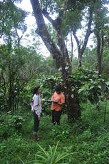 Study of micro-ecosystem (mansi-shah) Tags: rainforest farming coorg madikeri forestecology mansishah rainforestretreat jenniferpierce ceptsummerschool