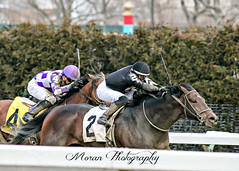 Summit Moon (EASY GOER) Tags: horses horse track racing aqueduct races 56 equine thoroughbreds 400mm canon5dmarkiii