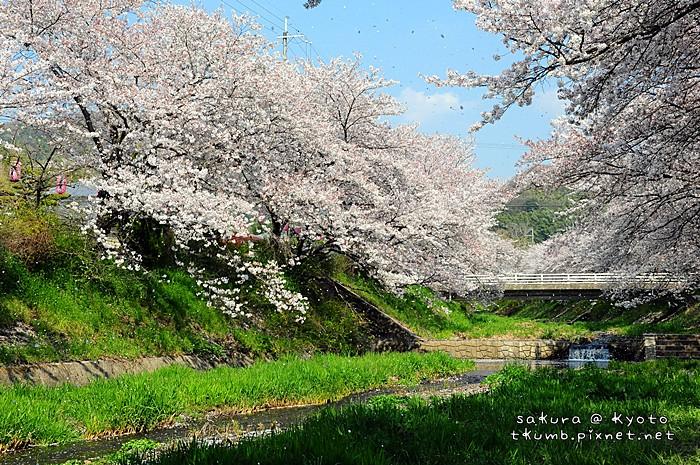 2014玉川 (13).jpg