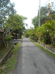 DSCN1791 (petersimpson117) Tags: pererenan pengembungan