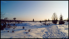 Fagnes - 04 - Winter Landscape (Ld\/) Tags: winter mars sun snow nature march belgium belgique belgie ardennen ardennes sunny neige michel venn hoge malmedy hautes fagnes haute naturelle magie dcor hautesfagnes baraque 2016 ardenne venen hohes waimes barraque rserve frique jalhay