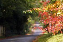 Autumn colour (crafty1tutu (Ann)) Tags: autumn red orange plant fall leaves outdoor australia bluemountains foliage nsw mtwilson anncameron autumncolour crafty1tutu canon1dx canon7020028lserieslens