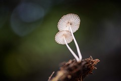 cogumelo 1/4 (Golphin) Tags: cogumelo d610