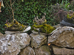 Green shoes (diarnst) Tags: nature moss shoes outdoor natur schuhe moos oldshoes