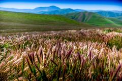 Light (ScorpioOnSUP) Tags: california landscape photography highlands desert hiking adventure wildflowers grassland rollinghills bakersfield dayhike sanemigdiomountains windwolvespreserve