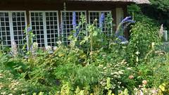 Closeup of the Cottage Garden Flower Bed (justmecpb) Tags: summer newyork unitedstates longisland zinnia achillea marigold delphinium goldcoast cleome oldwestburygardens cottagegarden oldwestbury spiderflower bellsofireland