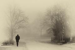 misty morning (krllx) Tags: street city people mist monochrome weather norway fog sepia norge europe streetphotography streetphoto scandinavia trondheim srtrndelag trndelag menneske midtnorge nedreberg dsc04737edit201604061