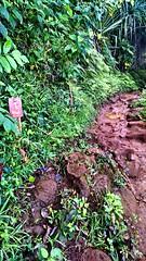 8 - hanakapiai (razel.mella) Tags: hawaii outdoor hike falls waterfalls kauai adventures hanakapiai
