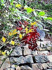 Burst of Spring (Olin Gilbert) Tags: awardtree