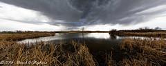 Time To Go (dcstep) Tags: sky clouds reeds us pond colorado unitedstates cloudy cattails allrightsreserved englewood cherrycreekstatepark cottonwoodcreek dxoopticspro1054 copyright2016davidcstephens f4a5735dxo