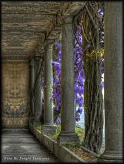 La villa dei glicini (celestino2011) Tags: casa albero tronco pietra hdr colonne glicine