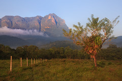 Countryside and Marumbi mountain  in Paran State - Brazil (Luc Stadnik) Tags: brazil mountain tree sunrise fence country tropical parana firstlight morretes marumbi conuntryside