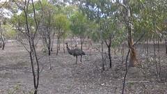 Para Wirra 22 (WEA Ramblers) Tags: hiking australia bushwalking southaustralia parawirra yattalunga fayharding