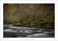 Strata (shaun.argent) Tags: trees tree texture water woodland river spring woods seasons geology riverure shaunargent