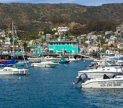 Harbor Views (Vegan Feast Catering) Tags: birthday catalina avalon