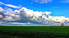 Aprilwolken (Wunderlich, Olga) Tags: landscape natur himmel wolken rgen baum deu mecklenburgvorpommern inselrgen