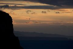 Cantabrian cliff sunset (RubénRamosBlanco) Tags: sunset naturaleza nature colors birds landscape atardecer dusk wildlife gulls asturias paisaje aves colores cliffs animales gaviotas acantilados