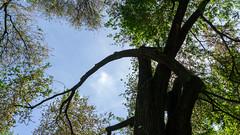 Nature shape (manuelserafini) Tags: sky color green primavera nature body branches shape