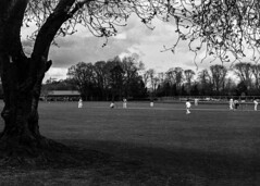 Cricket in the park (adrian.sadlier) Tags: film walking spring cricket malahide fujineopan400 nikonf5
