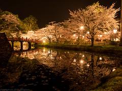 Sakura Refrection 2016 (gemapozo) Tags: park japan night cherry pond pentax blossom jp aomori 日本 sakura lightup 夜景 夜桜 サクラ hirosakipark hirosakicity 青森県 ライトアップ 弘前公園 弘前市 645z smcpentaxfa64535mmf35alif