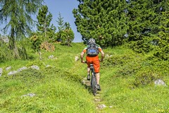 bike traveller uphill (mezzotint_de) Tags: trip trees vacation man green sports nature bike bicycle sport forest landscape holidays track tour ride time path mountainbike meadow trail riding mtb backpack biker leisure rucksack uphill rider touring highaltitude firtrees highmountains outddoors