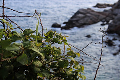 IMG_2554 (riccardonicolosi47) Tags: barcelona trip travel music nature canon spain places girona hd catalunya traveling barcellona spagna gerona tossademar figueras canon700d