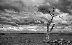 uncertainty (keith midson) Tags: sky cloud tree clouds rural dry deadtree drought tasmania lonetree