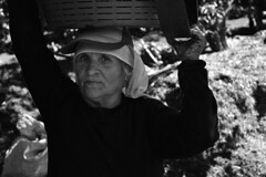 Heredia, Costa Rica. (Elías Esquivel) Tags: blackandwhite coffee beans workers costarica blackandwhitephotography coffeebeans heredia coffeeplantation barva hardworkers coffeeplantations sanjosedelamontaña