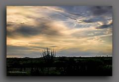 CREPSCULO  II. (manxelalvarez) Tags: paisajes nubes puestadesol crepsculo serto solpor caatinga