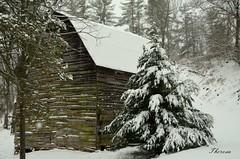 Snow can transform... (bankst) Tags: snow tree nature barn nikon farm group snowstorm northcarolina transformed metamorphose winterbeauty coth magicalscene d5100 daarklands daarklandsgroup