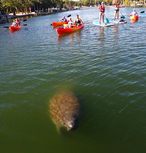 12_29_15  pm paddleboard tour Sarasota FL 04