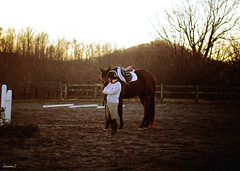 (suzcphotography) Tags: winter light sunset horse english canon 50mm riding pony jumper hunter lesson equestrian t3i engligh suzcphotography