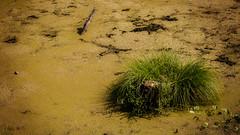 Lpvidk (Delfinibi) Tags: green outdoor tata olympus zuiko marshland magyarorszg zld lp lperd mzuiko olympusm1442mmf3556iir olympusepl5 fnyestansvny