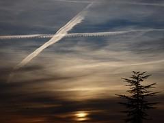 Oh cielos! 103. El Atlas prometido. (bego vega) Tags: madrid sky tree clouds sunrise amanecer nubes rbol atlas cielos vega vf bv bego aviones atlantica cedro cedrus estelas ohcielos