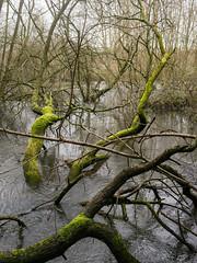 20160130-GR012920-Edit (fleetingphotons) Tags: moss fishing flooding ricohgr kennet wasingestate warrenbeat