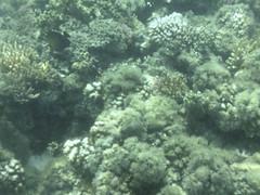 AGQ-20140423-0001 (AGQue) Tags: travel vacation fiji telephone cellphone april fj oceania 2014 underwaterphotography wetseason fji westerndivision iphoneography appleiphone4s gmt1200fijiislandsstandardtimezone