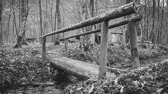 B&W-00722 (alessandro.polla) Tags: bridge blackandwhite bw italy mountains ice nature water river landscape woods iced woodbridge tentino