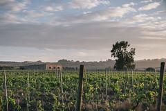 raccolta_2014_web-11 (solacium wine resort) Tags: castle tour wine winetasting syracuse sicily castello sicilia siracusa visite moscato degustazioni targia solacium moscatodisiracusadoc