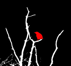 Crow 3 (tubblesnap) Tags: red white black tree bird art photoshop dead arty graphic layers crow
