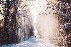 Winter forest (*Nishe) Tags: road winter light snow forest photography path nishe
