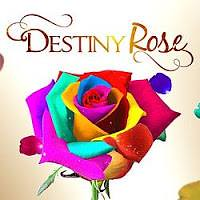 Destiny Rose February 8 2016 http://www.mypinoyako.com/2016/02/destiny-rose-february-8-2016.html (dsvictoriano) Tags: ako channel pinoy tambayan