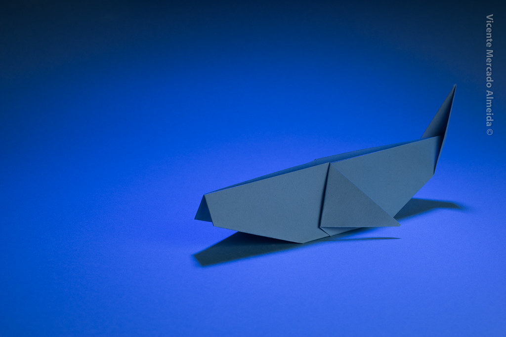 the worlds best photos of origami and whale flickr hive