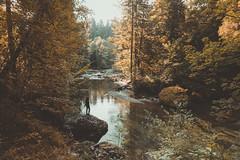 Rest (regnumsaturni) Tags: autumn trees people sunlight forest vintage landscape outdoor wanderlust vsco