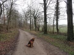 2016-0086 (schuttermajoor) Tags: nederland hond che eijsden 2016 airedaleterrier ommetjenederland