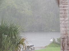 A Rainy Day in Sarasota (soniaadammurray - SLOWLY TRYING TO CATCH UP) Tags: rain quotes sarasota eeyore digitalphotography stops henrydavidthoreau henrywadsworthlongfellow letitrain shadesgreener