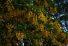 Punta Arenas / Magallanes & Antartica Chilena Region / Chile (silkylemur) Tags: ocean chile cruise sea patagonia seascape southamerica canon lens landscape tierradelfuego ship fullframe canoneos ona magallanes zoomlens endoftheworld beaglechannel chilena puntaarenas findelmundo landscapephotography llens 24105mm canonef canonef24105mmf4l canonef24105mmf4lisusm キャノン eflens patagoniachilena selknam canonef24105mmf4lisusmlens efmount chileanpatagonia regióndemagallanesydelaantárticachilena canoneos6d fuegian regióndemagallanesydelaan chilenamagallanestierra