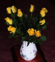 DSC_0773 Roses (PeaTJay) Tags: flowers roses plants macro nature rose gardens fauna reading flora indoors micro closeups berkshire rosebuds lowerearley nikond750