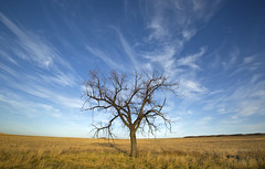 the tree of life (eDDie_TK) Tags: trees sky clouds colorado weld co pawneenationalgrasslands pawneegrasslands weldcounty weldcountyco